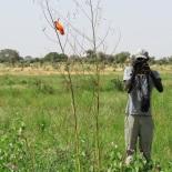 Birding Gamadji Sare with VIeux (B. Piot)